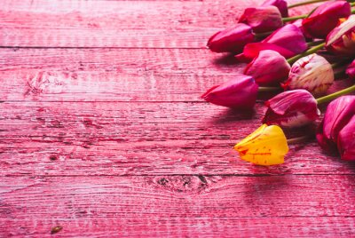 Various of colorful tulips_5