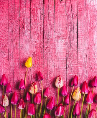 Various of colorful tulips_7