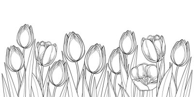 Sticker Vector horizontal border with outline tulip flowers, bud and ornate leaves in black isolated on white background. Contour tulips for greeting spring design or coloring book.