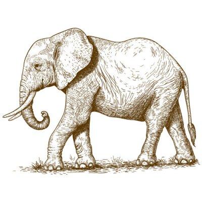Sticker vector illustration of engraving elephant