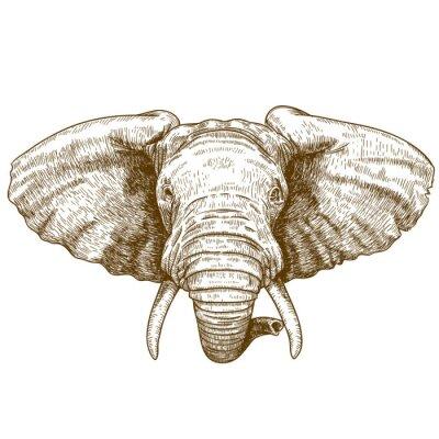 Sticker vector illustration of engraving elephant head