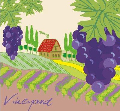 Sticker Vector illustration of vineyard