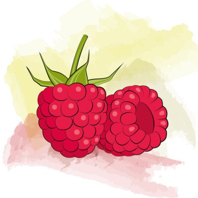 Sticker Vector raspberry on watercolor background