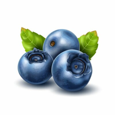 Sticker Vector realistic blueberry with 3d leaves set