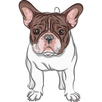 Sticker vector sketch domestic dog French Bulldog breed