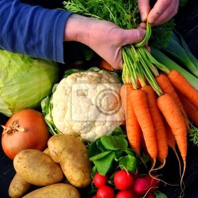 Sticker vegetables