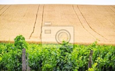 vigne and corns bio