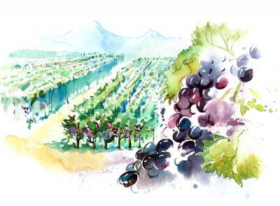 Sticker vineyards