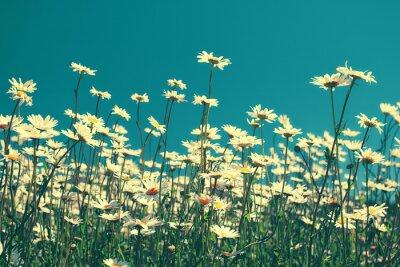 Sticker Vintage chamomile flowers against blue sky