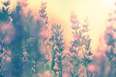 Sticker Vintage lavender sunset