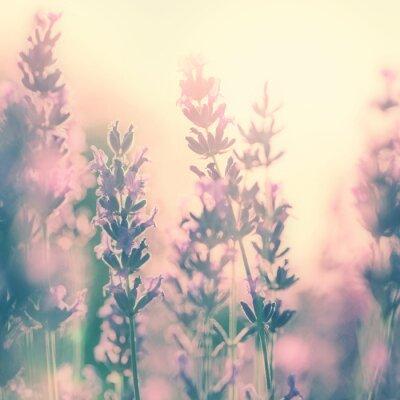 Sticker Vintage sunny lavender