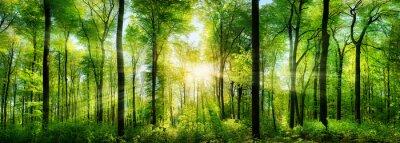 Sticker Wald Panorama mit Sonnenstrahlen
