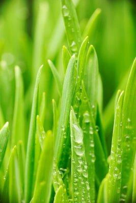Sticker Water drops on grass