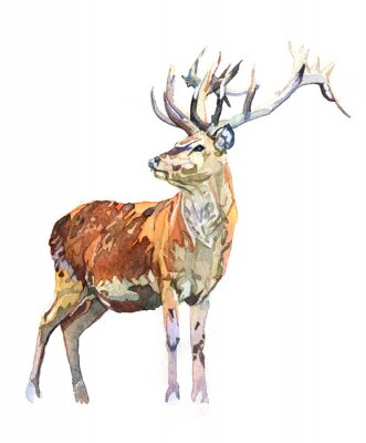 Sticker Watercolor animal deer isolated on white background