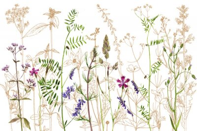 Sticker watercolor drawing flowers and plants