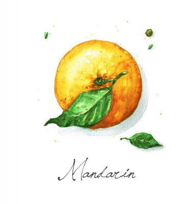 Sticker Watercolor Food Painting - Mandarin or Orange