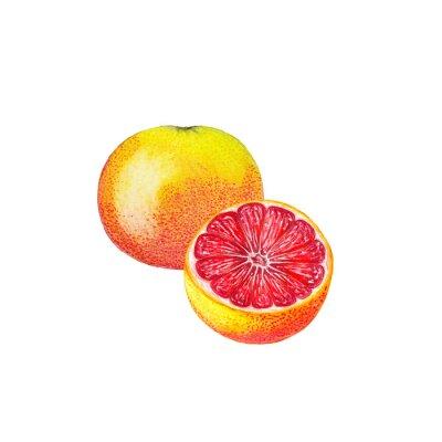 Sticker Watercolor grapefruit