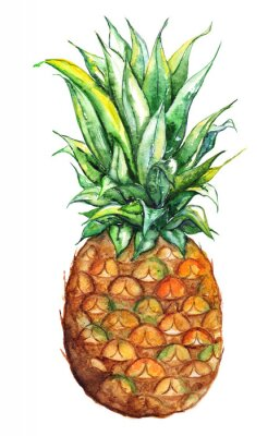 Sticker Watercolor hand drawn pineapple exotic tropical fruit isolated