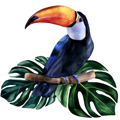 Sticker Watercolor hand painted colorful realistic illustration of toucan bird with monstera leaves. Bright tropical composition is perfect for invitation for thematic wedding or party.