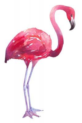 Sticker watercolor illustration of a flamingo