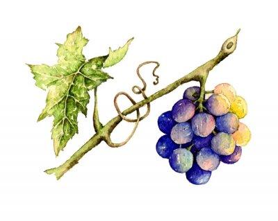 Sticker Watercolor illustration of grape