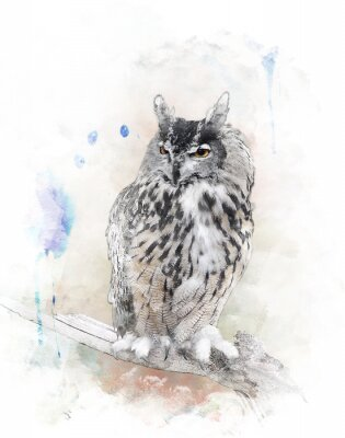 Sticker Watercolor Image Of  Owl