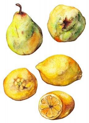 Sticker Watercolor lemon citrus pear fruit set isolated