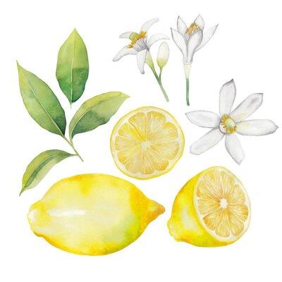 Sticker Watercolor lemon collection