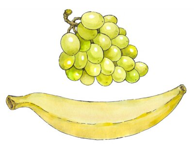 Sticker Watercolor painting of a set of fruit: grapes and banana
