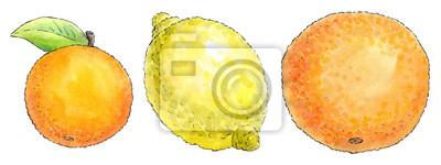 Sticker Watercolor painting of a set of fruit: mandarin, lemon and orang
