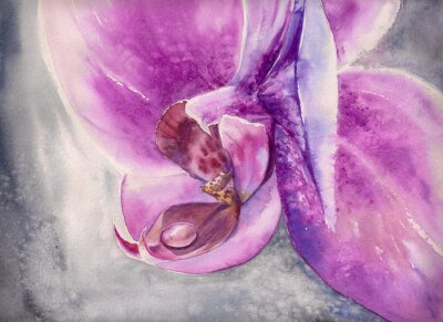 Sticker Watercolor panting of pink orchid flower with small water drop.