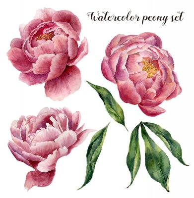 Sticker Watercolor peony set. Vintage floral elements with peony flowers and leaves isolated on white background. Hand drawn botanical illustration for design