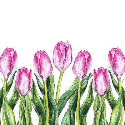 Sticker Watercolor pink tulip flower nature border frame