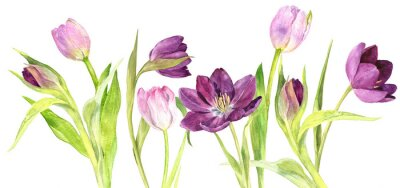 Sticker watercolor purple and pink tulips