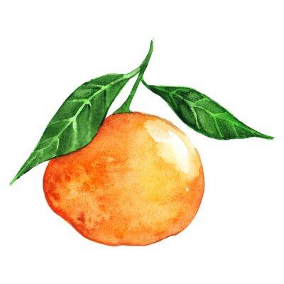 Sticker Watercolor ripe orange mandarin citrus fruit isolated
