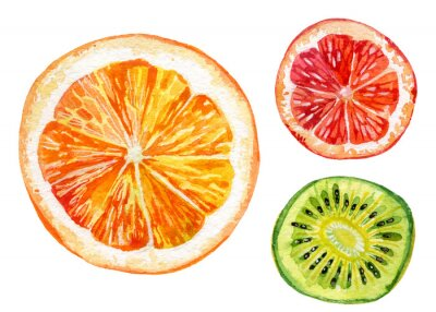 Sticker Watercolor set of fresh orange, kiwi and grapefruit