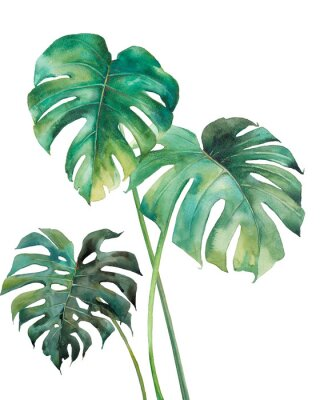 Sticker Watercolor tropical leaves poster. Hand painted exotic green branches isolated on white background. Summer plants illustration