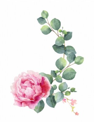 Sticker Watercolor vector hand painting illustration of peony flowers and green leaves.