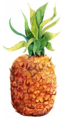 Sticker Watercolour pineapple on white background
