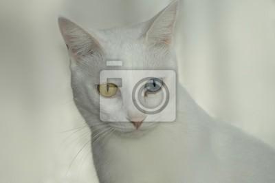 Sticker white