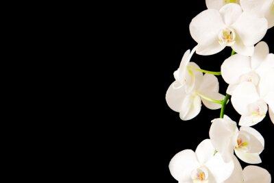 Sticker White  Orchid Branch.