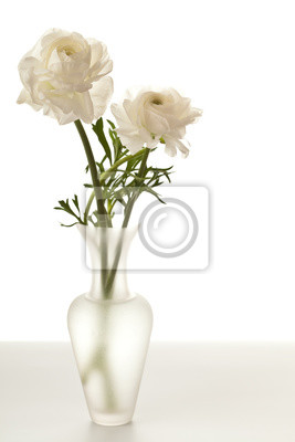 Sticker White Ranunculus in Vase Isolated on a White Background