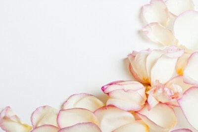 Sticker White roses's frame