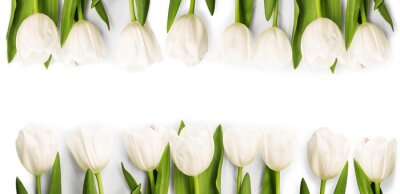 Sticker White Tulips with shadow