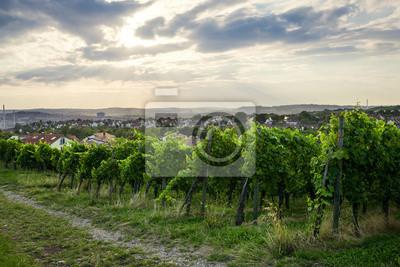 Sticker Wine fields in stuttgart germany