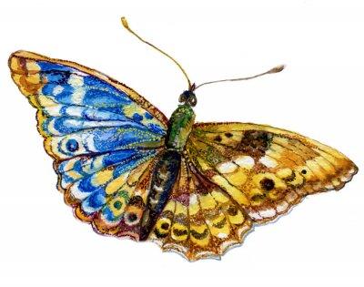 Sticker бабочка акварель, графика,насекомое ,рисунок ,