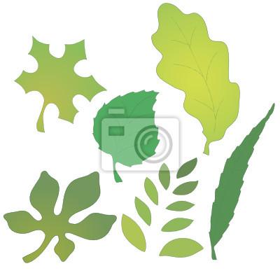 Векторное изображения листьев