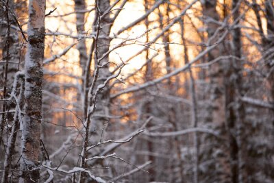 Sticker Берёзовый лес