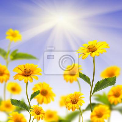 Sticker Yellow daisy background