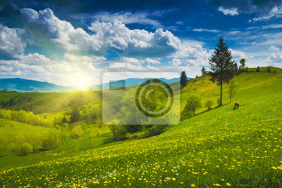 Yellow flowers in a green meadow